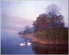 Lakeland Swans