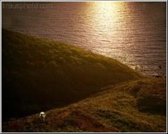 Cornwall Grazing