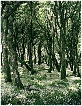 Mystical Woodland
