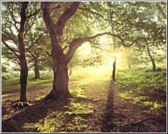 Where Paths Meet