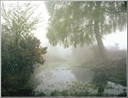 A River whose Streams