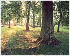 Illusive  Woodland