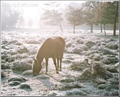 Cold Awakening