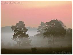 Awakening Woodland